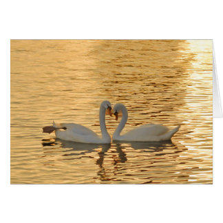 Swan Couple Meeting at Sunset Photograph Card