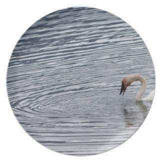 Swan Feeding Plates