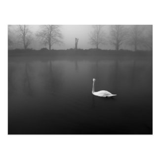 Swan, foggy morning postcard