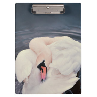 Swan · Lake Clipboards