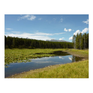 Swan Lake I at Grand Teton National Park Postcard