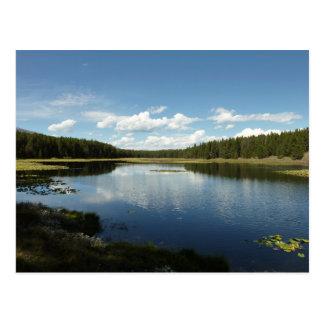 Swan Lake II at Grand Teton National Park Postcard
