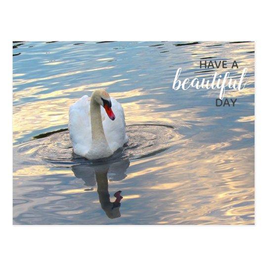 Swan on Blue Water Postcard