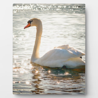 swan plaque