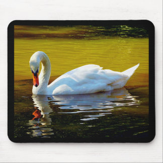 Swan Swimming On Lake In Beautiful Autumn Colors Mouse Pad