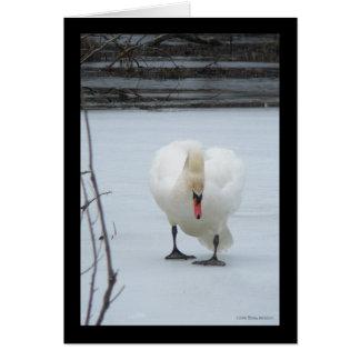 Swan Territory Card