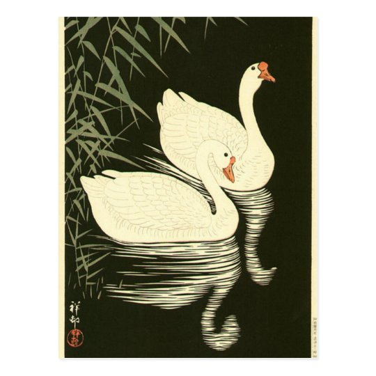 Swans and Reeds Postcard