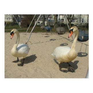 Swans at the Playground Postcard
