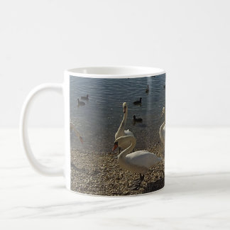 Swans cup