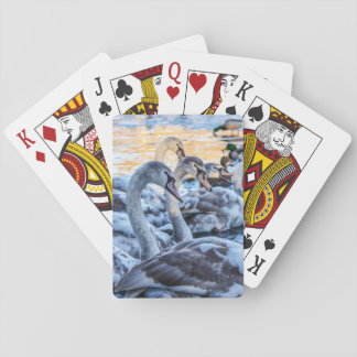 Swans & Cygnets Playing Cards