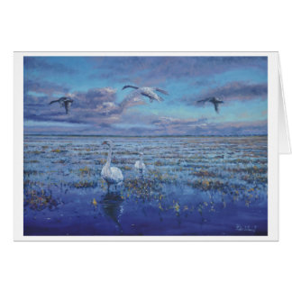 Swans feeding on the marsh card