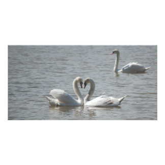 Swans in Love Photo Card Template