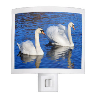 Swans in the blue lake water night light