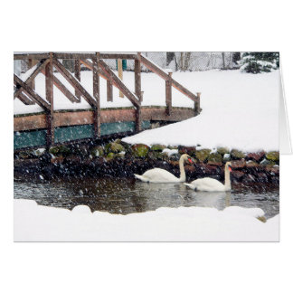 Swans in Winter Card