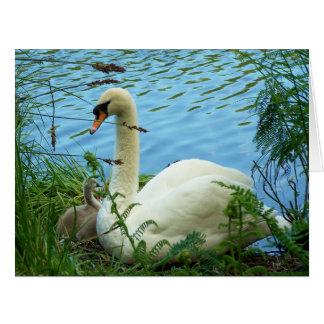 Swans Nest Large Card