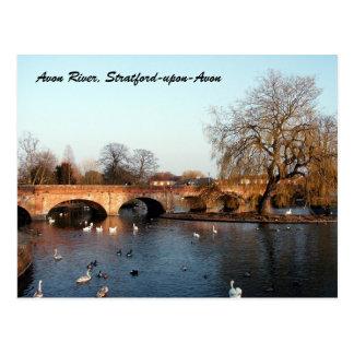 Swans on the River Avon, Stratford-upon-Avon Postcard