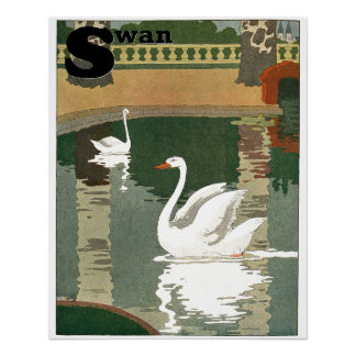 Swans Reflected in the Water Alphabet Perfect Poster