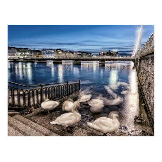 Swans shadows at Geneva lake, Switzerland Postcard