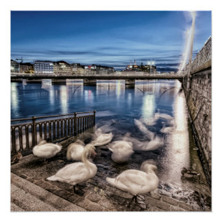 Swans shadows at Geneva lake, Switzerland Poster