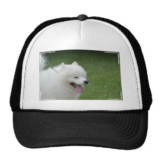 Sweet American Eskimo Dog Hat