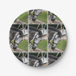 Sweet Appaloosa Horse 7 Inch Paper Plate