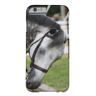 Sweet Appaloosa Horse Barely There iPhone 6 Case