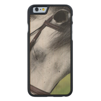 Sweet Appaloosa Horse Carved® Maple iPhone 6 Slim Case