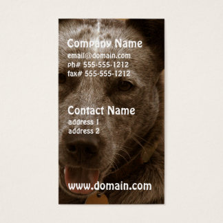 Sweet Australian Cattle Dog Business Card