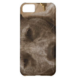 Sweet Australian Cattle Dog Cover For iPhone 5C