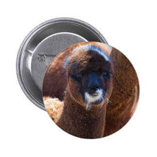 Sweet Baby Alpaca - Vicugna pacos Pinback Button
