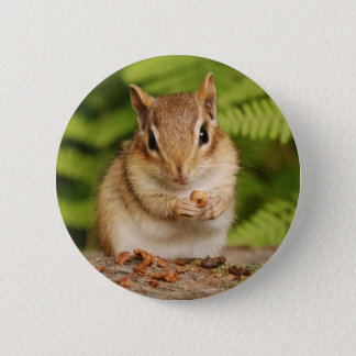 sweet baby chipmunk 2 inch round button