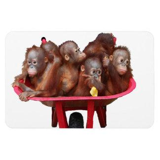 Sweet Baby Face Barrel of Monkeys Magnet