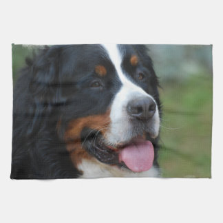 Sweet Bernese Kitchen Towel