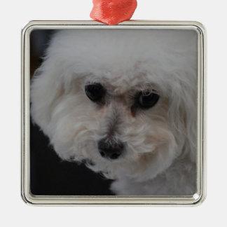 Sweet Bichon Frise Silver-Colored Square Ornament
