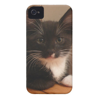 Sweet black and white Kitten looking at YOU iPhone 4 Case