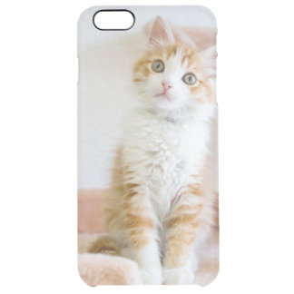 Sweet Blue Eyed Kitty Clear iPhone 6 Plus Case