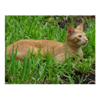 sweet brown cat postcard