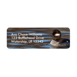 Sweet Bufflehead Duck on Sunlit Waters