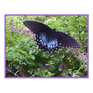 Sweet Butterfly Postcard