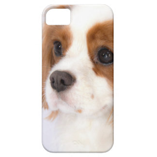 Sweet Cavalier King Charles Spaniel iphone 5g Case