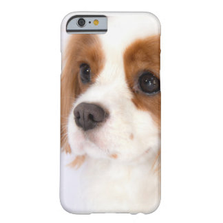 Sweet Cavalier King Charles Spaniel iPhone 6 case