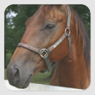 Sweet Chestnut Horse Stickers