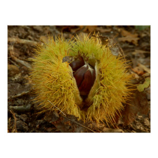 Sweet Chestnut Poster