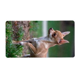 Sweet Chihuahua Puppy Gundog Wannabe Labels