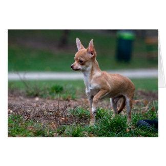Sweet Chihuahua Puppy Gundog Wannabe Note Card