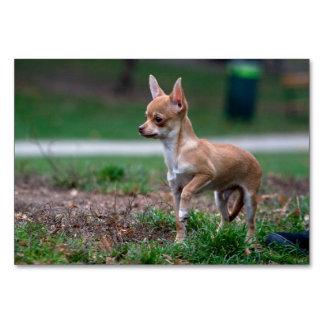 Sweet Chihuahua Puppy Gundog Wannabe Table Card