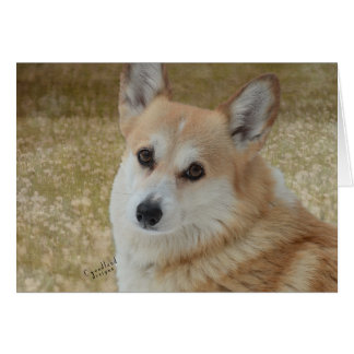 Sweet Corgi Face Card