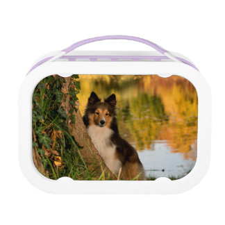 Sweet Cute Dog Lunch Boxes