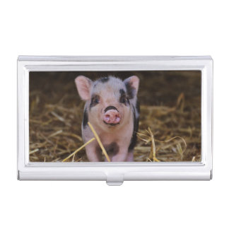 Sweet Cute Pig Business Card Cases