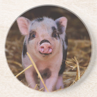 Sweet Cute Pig Drink Coasters